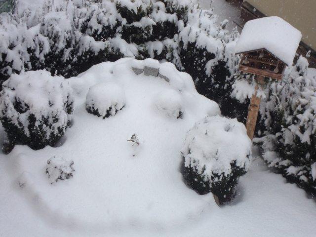 Schnee wie herrlich !