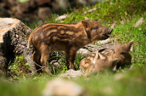 Zoo & Tiergarten - Ausflugsziele im Salzburger Land & in der Stadt Salzburg